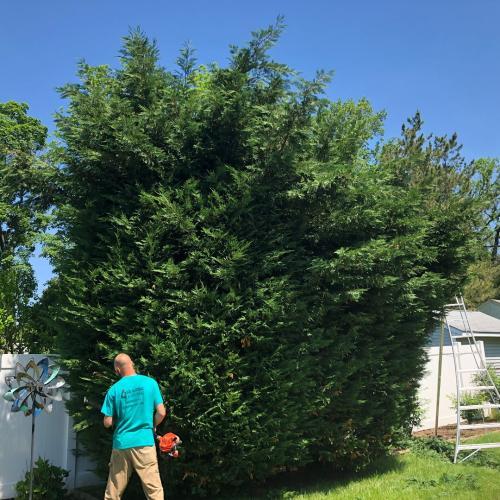 1-pruning