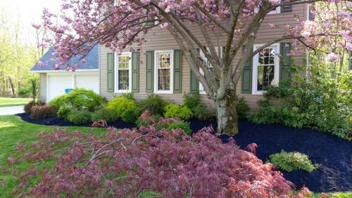 beautiful-pink-trees-and-flower-bed-design