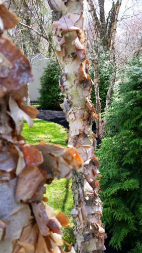 trees-in-backyard