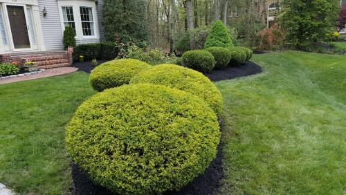 trimming-pruning-and-hedging-haddonfield